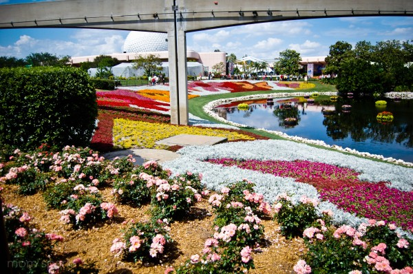 Epcot Plants and Flowers 2