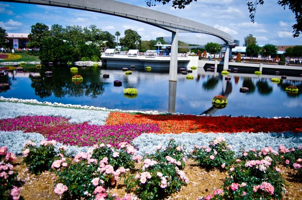 Epcot Plants and Flowers