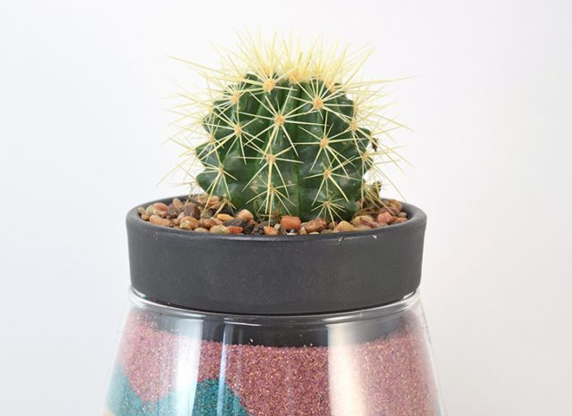 DIY Keepsake Cactus Sand Planter