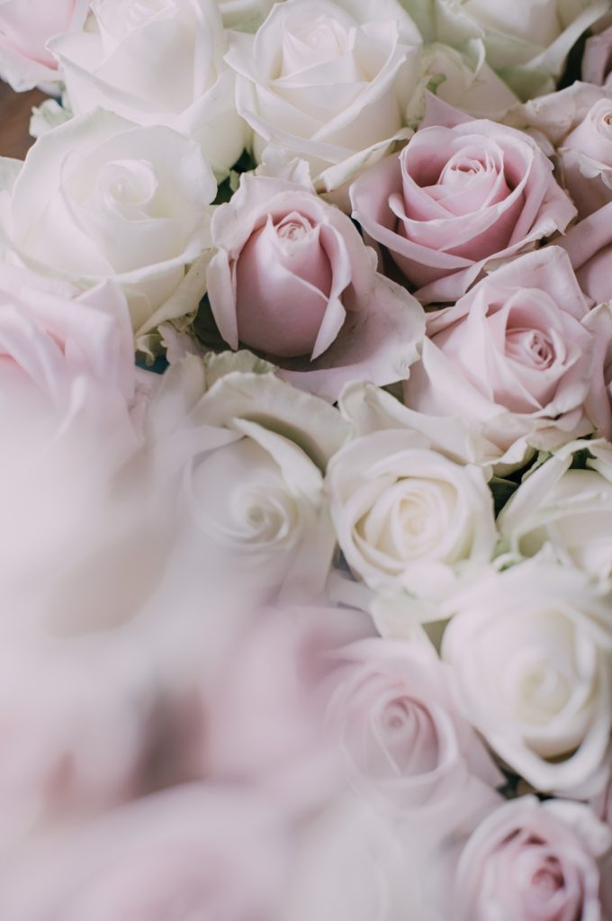 White and Blush Pink Roses