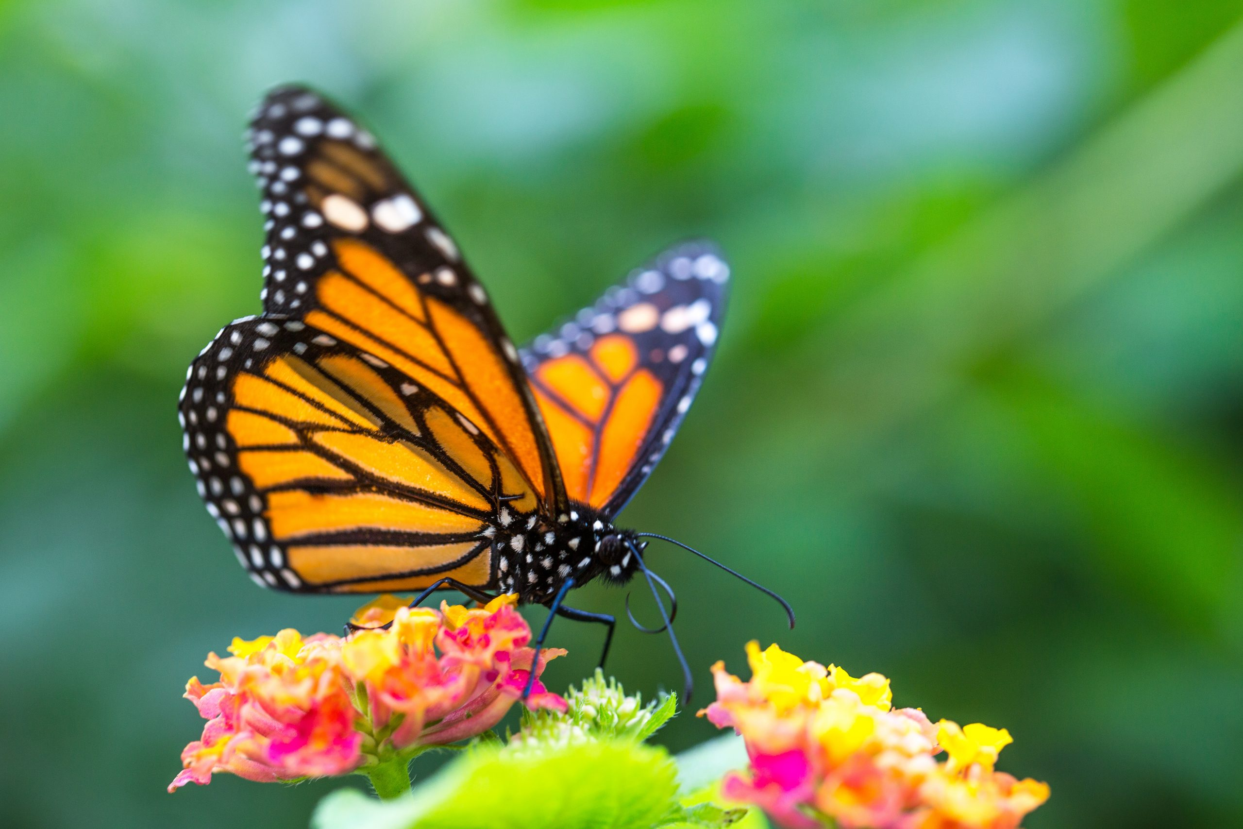 How to Create a Beautiful Butterfly Garden